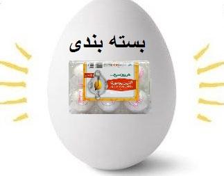بندی تخم مرغ تنها